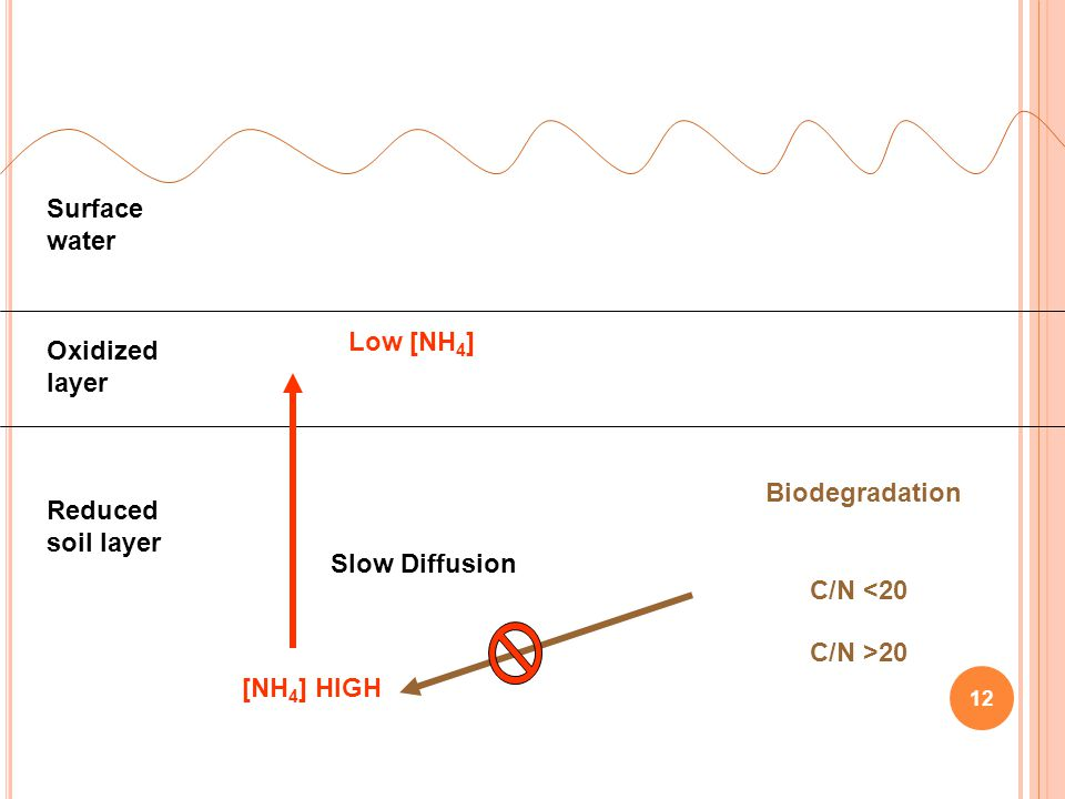 Surface water Low [NH4] Oxidized layer. Biodegradation. Reduced soil layer. Slow Diffusion. C/N <20.